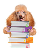 Dog with books — Stock Photo