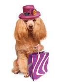 Funny dog with shopping bags — Stock Photo