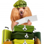 Постер, плакат: Dog traveler