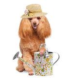 Hond van de tuinman — Stockfoto