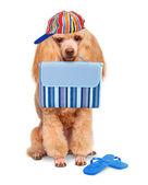 Dog. Holidays at sea — Zdjęcie stockowe