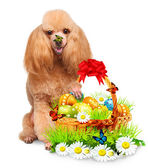 Dog with Easter Basket — Stock Photo