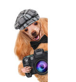 Fotograaf hond — Stockfoto