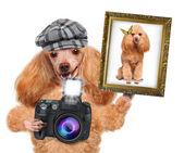 Fotograf hund — Stockfoto