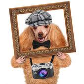 Photographer dog — Stock Photo