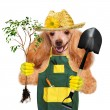 Dog gardener — Stock Photo #42276121