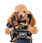 Business dog on the phone — Stock Photo