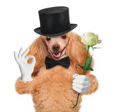 Dog with flower — Stockfoto