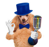 Dog with a microphone — Stock Photo