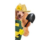 Dog gardener — Stock Photo
