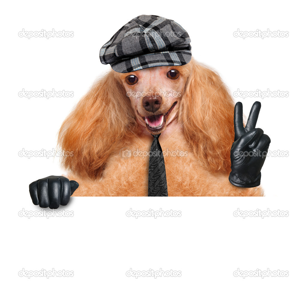 Black leather gloves with coloured fingers - Dog With Peace Fingers In Black Leather Gloves Stock Image