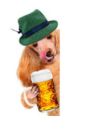 Dog with a beer mug, smiling happy behind a placard — Stock Photo