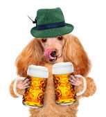 Dog with a beer mug — Stock Photo