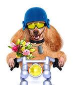 Cane moto — Foto Stock