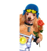 Motorbike dog — Stock Photo