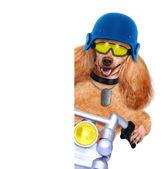 Motorbike dog — Stok fotoğraf