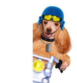 Motorbike dog — Stock Photo