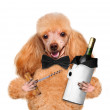 Dog with a bottle of wine on a white background — Stock Photo