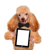 Dog holding a blank tablet pc — Stock Photo