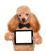 Dog holding a blank tablet pc — Foto Stock