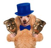 Hund med teater masker — Stockfoto