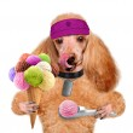 Dog with ice cream — Stock Photo