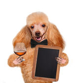 Dog with a cocktail — Stockfoto