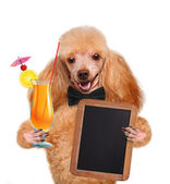 Dog with a cocktail — Stock Photo