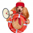 Dog with a megaphone. — Stock Photo #42969895