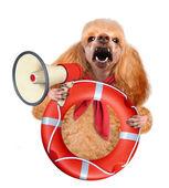 Pies z megafon. — Zdjęcie stockowe