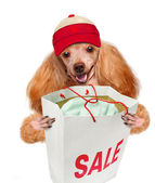 Dog. Shopper. Sales. — Stock Photo