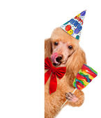 Birthday dog — Stock Photo
