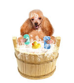 Dog washes — Foto de Stock