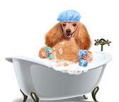 Produits pour laver les chien — Photo