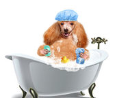 Dog washes — Stock Photo