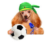 Dog playing football — Stock Photo