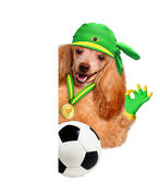 Hund spielen fußball — Stockfoto