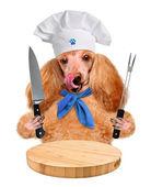 Dog chef — Stock Photo