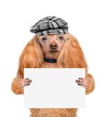 Dog holding a blank banner — Foto de Stock