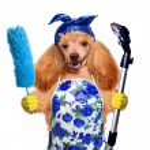 chien de femme au foyer — Photo #43700347
