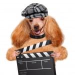 Movie clapper board director dog. — Stock Photo #43771793