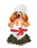 Dog in the egg. — Stock Photo