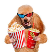 Dog watching a movie. — Stock Photo
