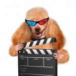 Movie clapper board director dog. — Stock Photo #43796255