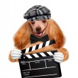 Movie clapper board director dog. — Stock Photo