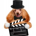Movie clapper board director dog. — Stock Photo #43877763
