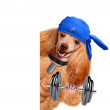 Personal trainer dog with dumbbells and a whistle — Stock Photo #45193109