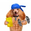 Personal trainer dog with dumbbells and a whistle — Stock Photo #45193129
