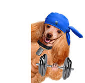 Personal trainer dog with dumbbells and a whistle — Stock Photo