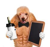 Sexy dog. — Stock Photo